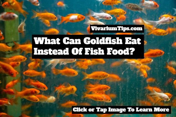 what can goldfish eat instead of fish food
