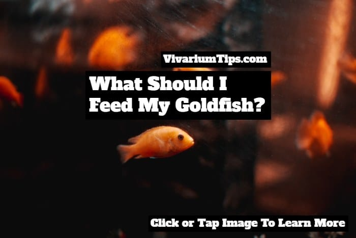 what should I feed my goldfish