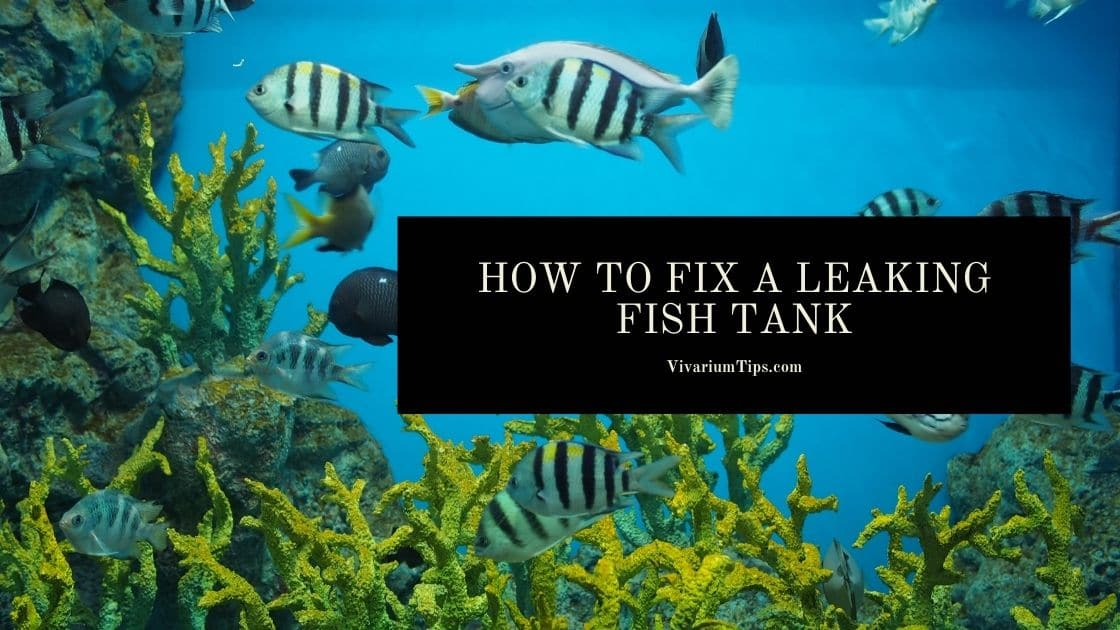 How To Fix A Leaking Fish Tank