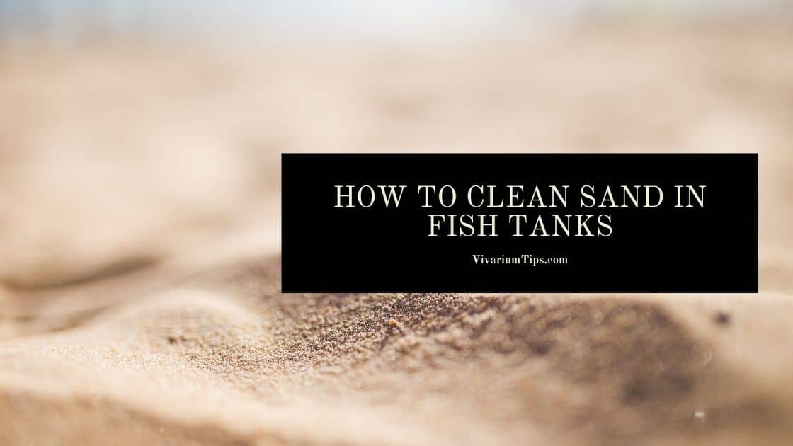 How To Clean Sand In Fish Tanks