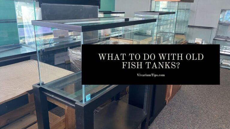 What To Do With Old Fish Tanks?