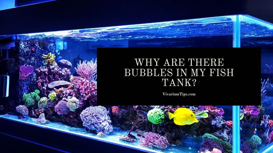 Why Are There Bubbles In My Fish Tank