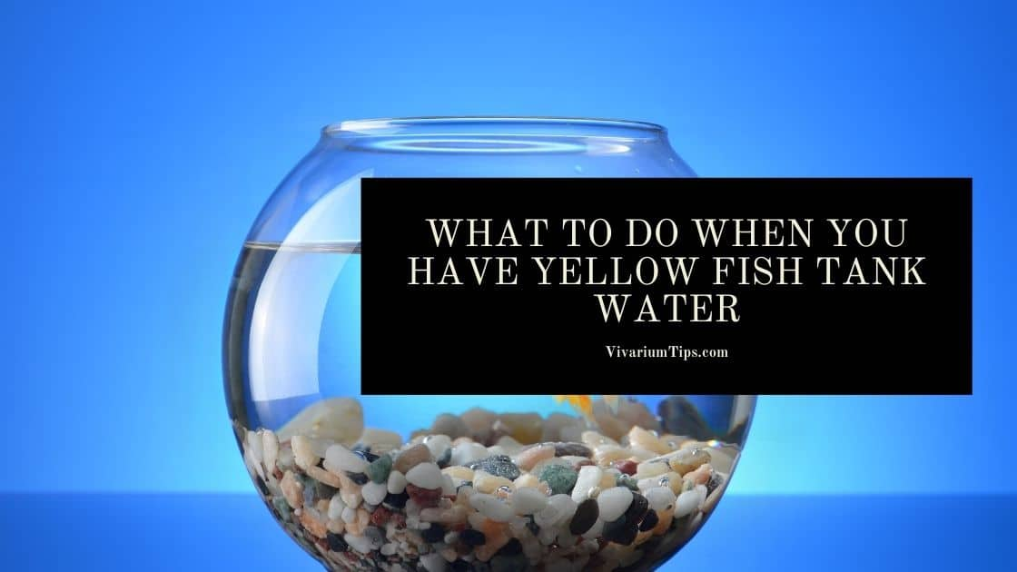 Yellow Fish Tank Water